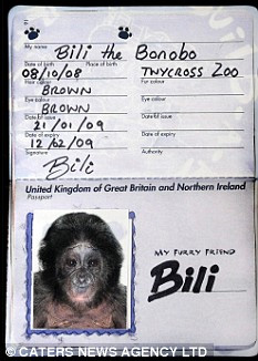 Bili the bonobo's passport