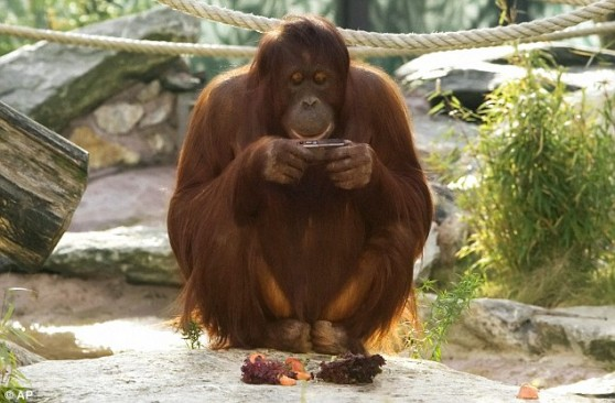 orangutanphotographer