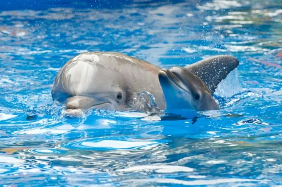 Dolphin calf and mom at SeaWorld