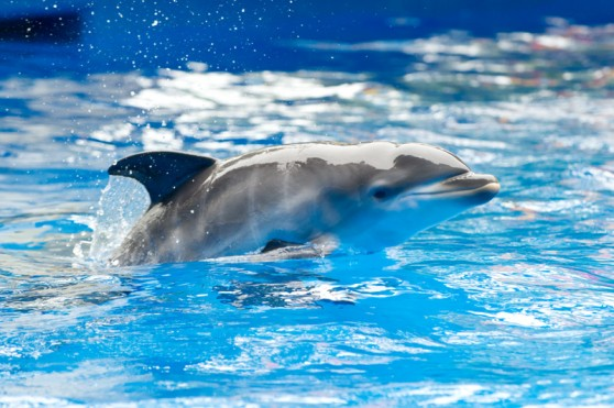 Dolphin calf at SeaWorld