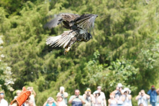 Bald eagle released into wild
