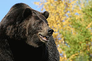 Bear at Woodland Park Zoo