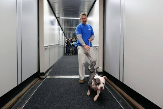 Sixty Hurricane Sandy Pets Fly First Class To New Holiday Home