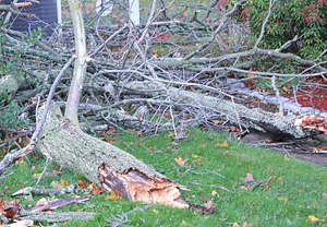 Downed tree branches