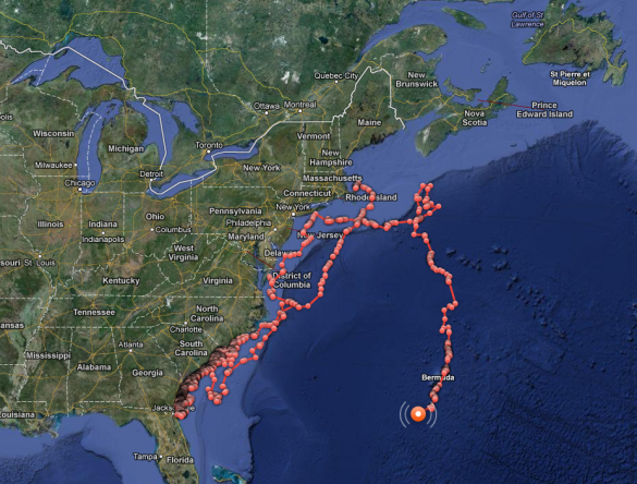 Shark Tracker