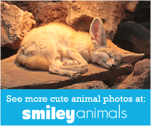 Cute animal photos at Smiley Animals!