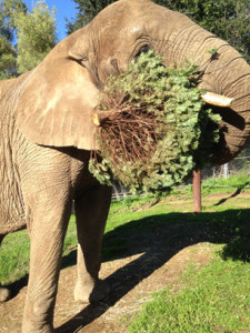Elephant with Christmas tree